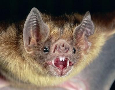 Public health alert after diseased bat found in West End park